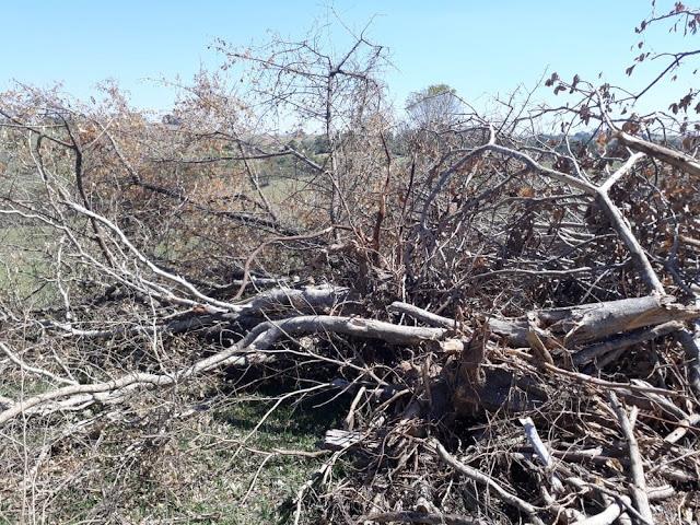 Sitiante é autuado em mais de R$ 40 mil por infrações florestais em Pacaembu