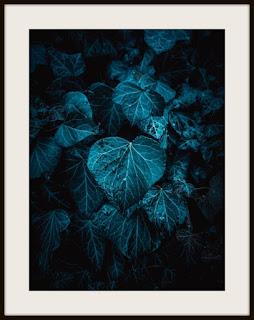 plakat, plakat z liściem, plakat z liściem w kroplach, plakat darkmood, plakat z liśćmi, plakat w kroplach deszczu, plakat roślinny, plakat A3, plakat pionowy, plakat z bluszczem