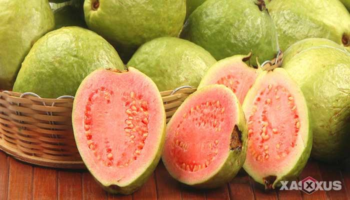 Makanan penambah darah - Jambu biji, buah penambah darah