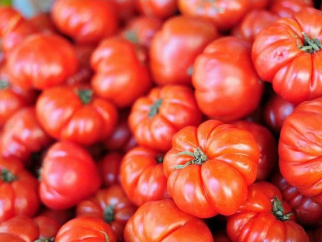 Daily Farm Benih Tomat Tomato Red Beefsteak Lubuklinggau