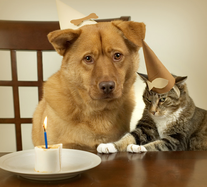 A dog and cat with party hats and a cake with one candle