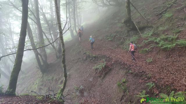 Niebla en el Bosque Fana, Ponga
