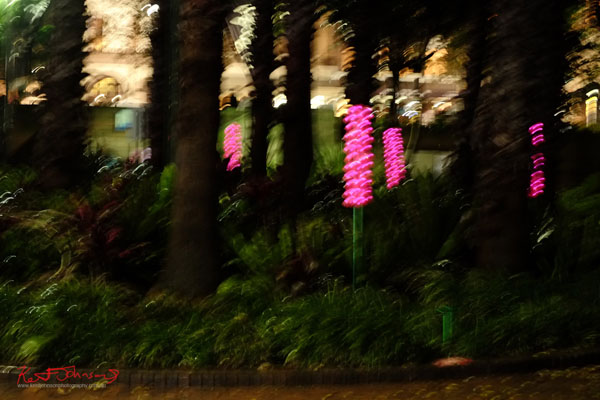 Pink light flowers at Vivid Sydney 3013