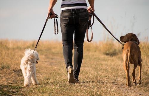 εκπαιδευση σκυλων να περπατανε διπλα