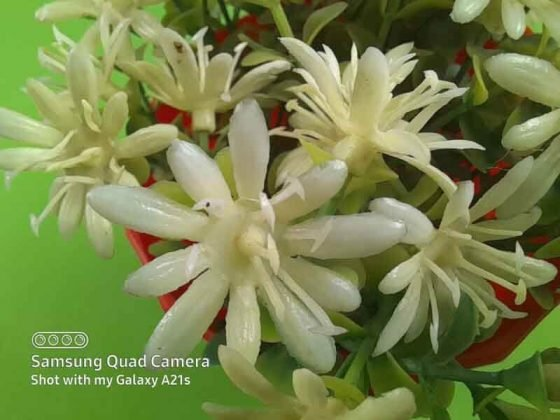Foto Hasil Kamera Samsung Galaxy A21s Makro
