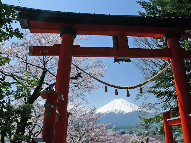 新倉山浅間公園 鳥居 富士山 桜