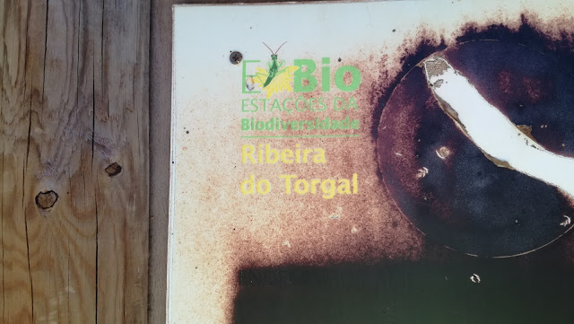 Placa Ribeira do Torgal já danificada