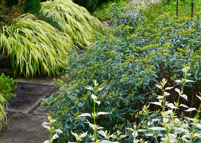 plant inventory at 20 timothy   hypericum kalmianum    st