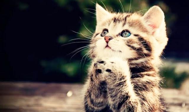اسماء قطط بنات اجنبية 2021