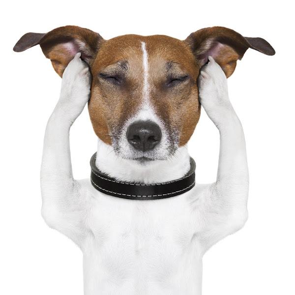 Conversar con el perro es desagradable