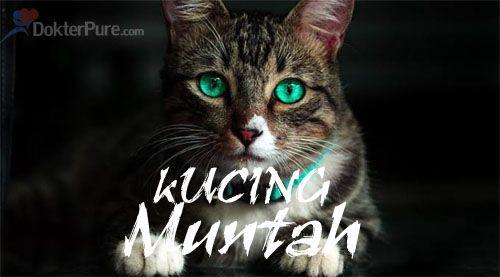 Cari tahu penyebab kucing muntah bening