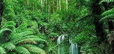 Manfaat Pohon Bagi manusia
