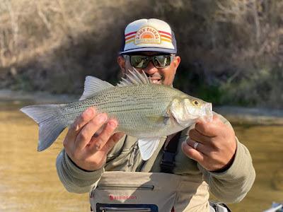 Fish Spotlight, Fish Spotlight White Bass, Kevin Opgenorth, White Bass, Fly Fishing for White Bass, White Bass in Texas, Texas Freshwater Fly Fishing, Fly Fishing in Texas, Texas Fly Fishing, TFFF, White Bass Fishing
