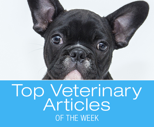 Top Veterinary Articles of the Week: Coat Color and Health, Diabetes, and more ...