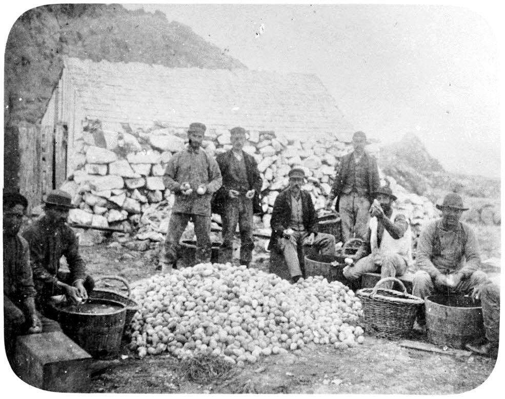 collecting eggs on Farallon Islands