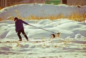 A imagem mostra um homem que anda um cão. Ambos estão tentando caminhar em direções opostas.