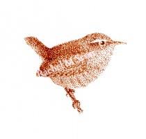 Wren stipple illustration by Rachel M Scott