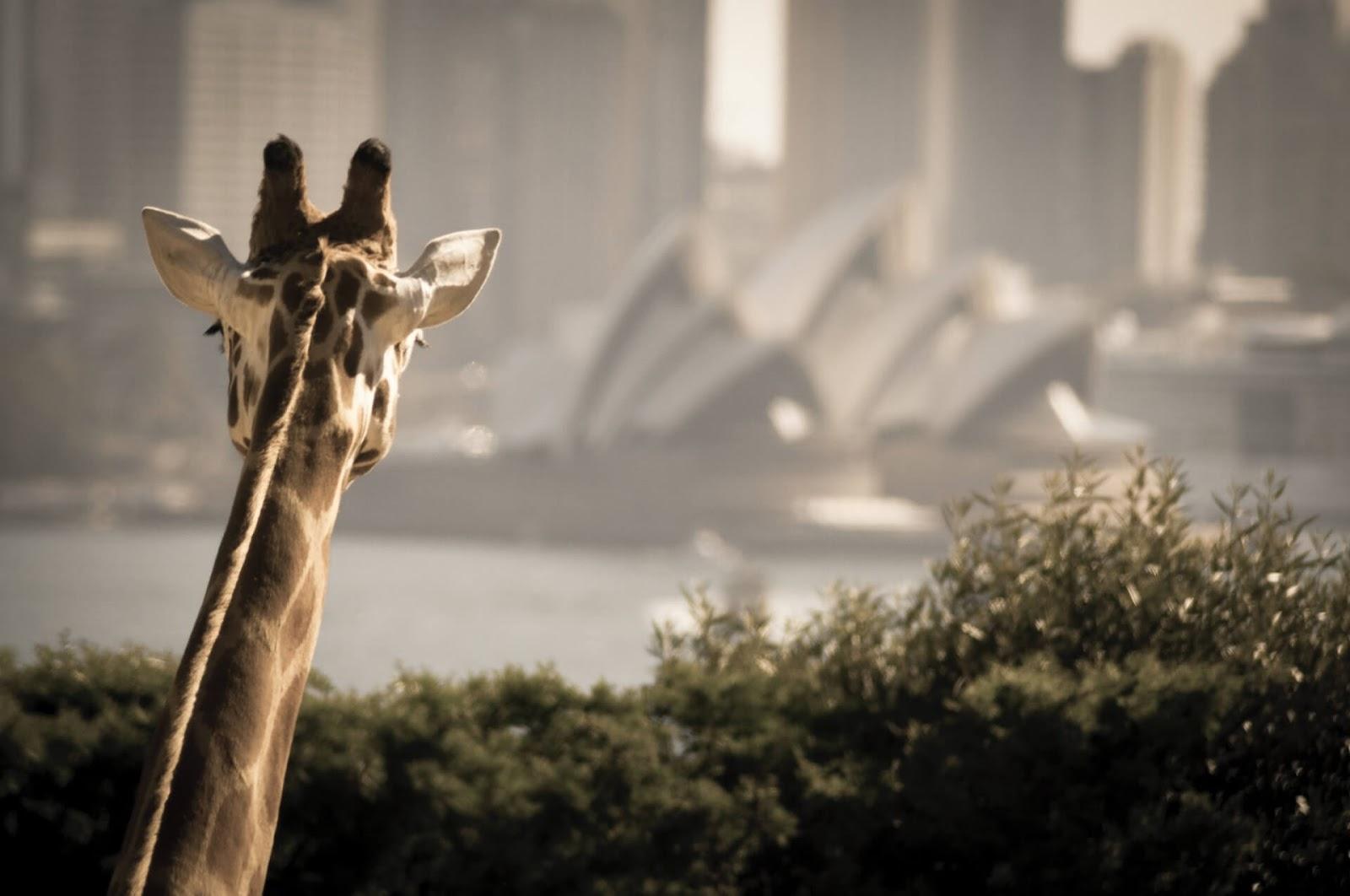 Taronga Zoo Wharf, Australia