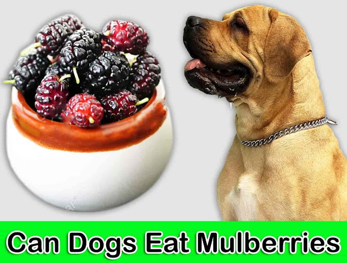 Can Dogs Eat Mulberries | Are Mulberries Safe For Dogs