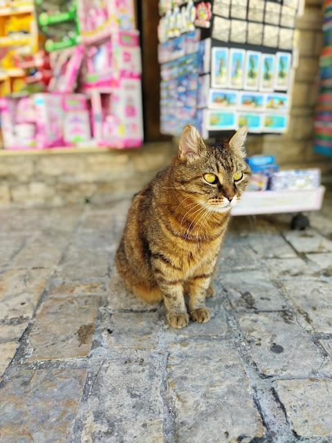 kot w Chorwacji, dom bez kota to głupota