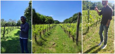 vigne nobile molinaccio