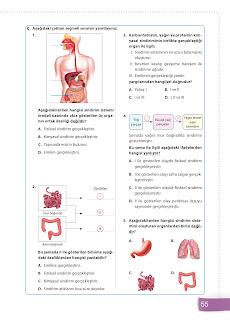 6. Sınıf Fen Bilimleri Ders Kitabı Cevapları Sevgi Yayınları Sayfa 55