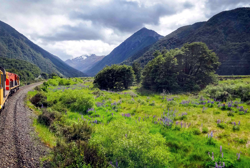 The 5 Best Train Journeys in New Zealand