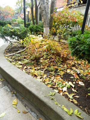 Garden District Toronto Fall Cleanup Before by Paul Jung Gardening Services--a Toronto Organic Gardener