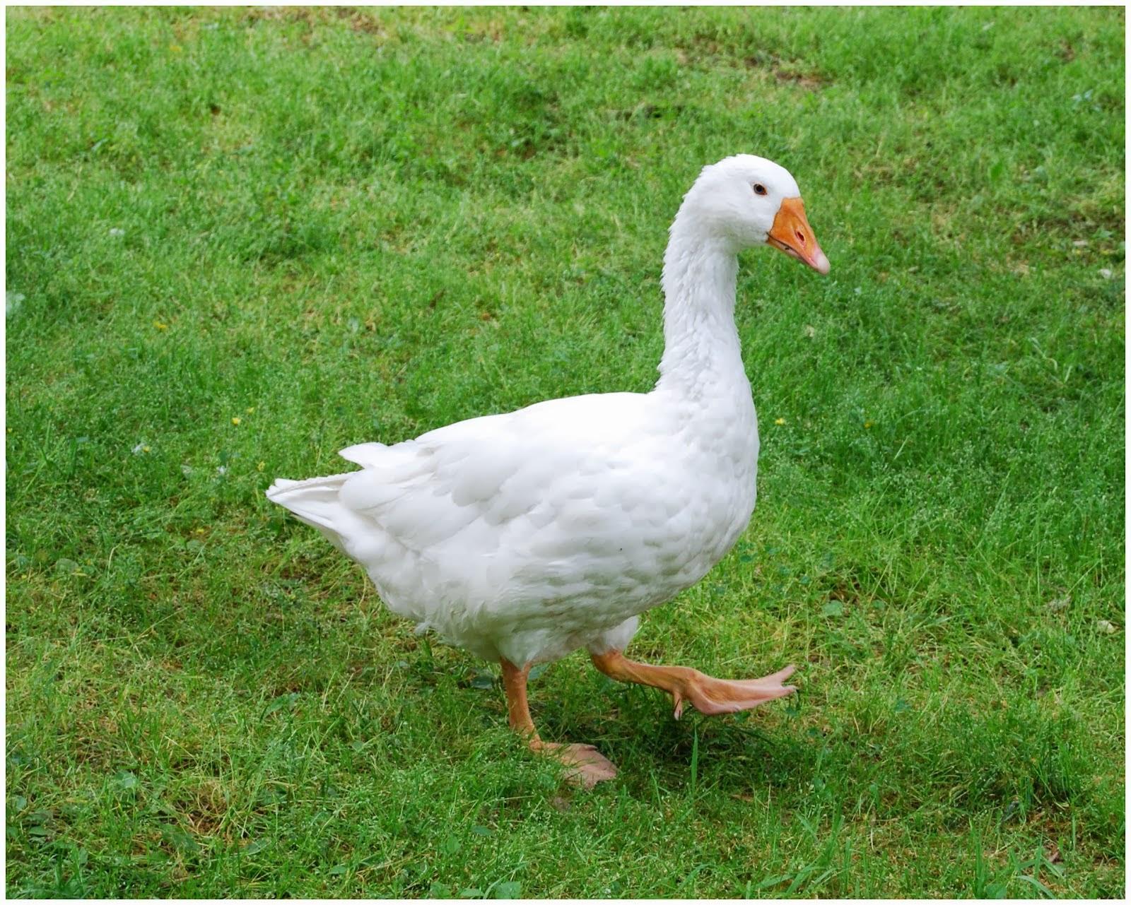 the christmas goose artxy