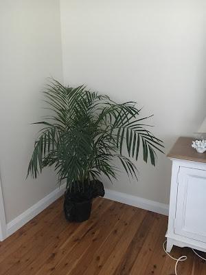 ALLL The Cheap Plants