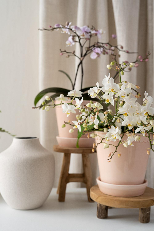 pienikukkainen orkidea