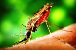 Tanda Orang Terserang Malaria