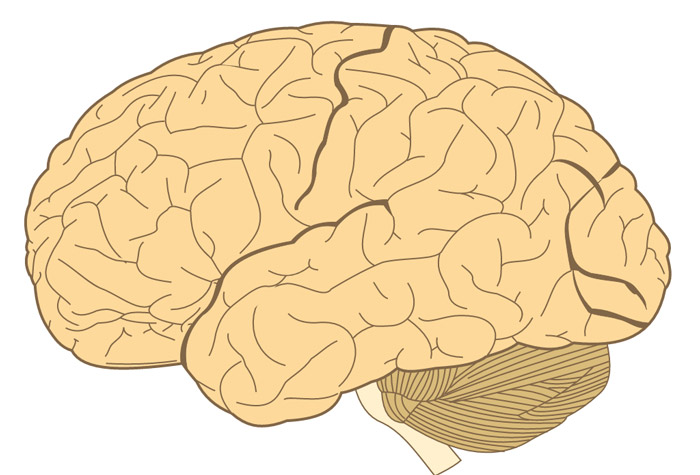 18 Facts about the Human Brain