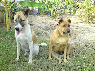 Unsere Hunde Jo und Bag
