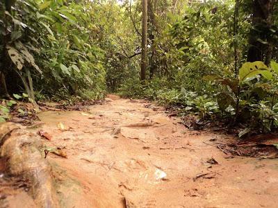 trilha até cachoeira da feiticeira, cachoeira, feiticeira, ilha grande, 15 metros, rio de janeiro,  T1, circuito abraão