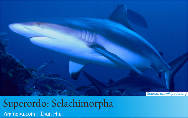 Fakta unik ikan hiu