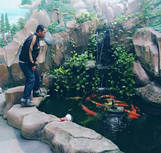 jasa kolam ikan koi