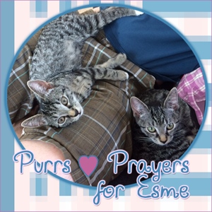 Purrs and Prayers for Esme