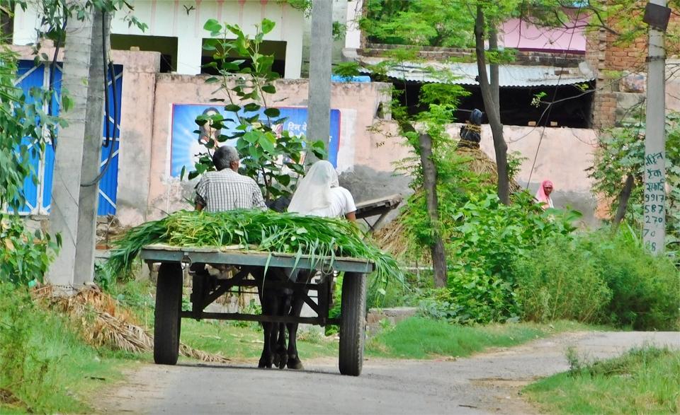 farmer-in-india