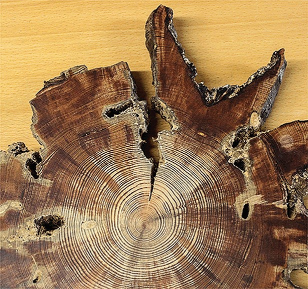Tree rings provide evidence for climate regime shifts in East Asia