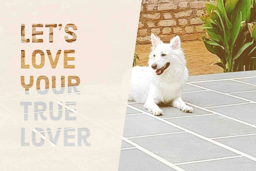 Most famous heart touching dog quotes for dog lovers for Instagram Isha Mysty