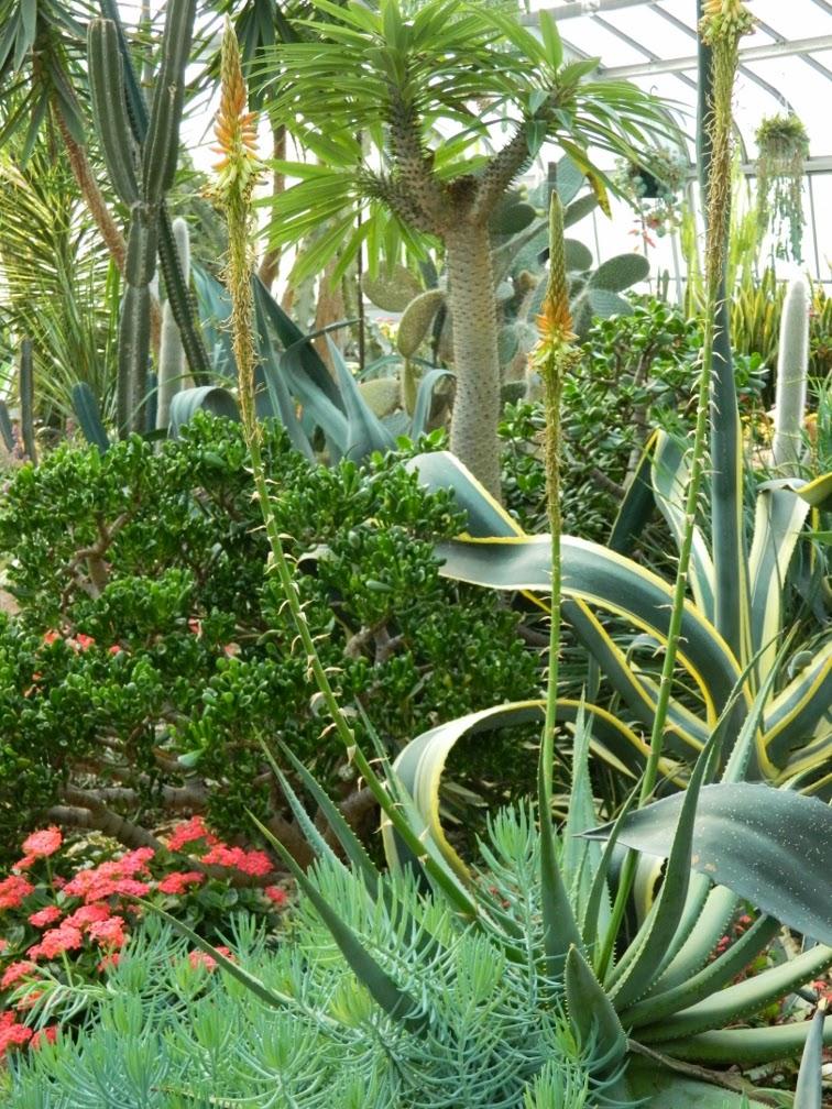 Garden Muses: Not Another Toronto Gardening Blog ...