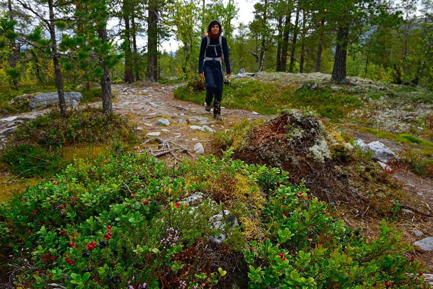 rondane nationalpark wandern