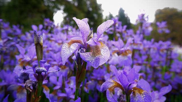 giardino dell'iris firenze foto