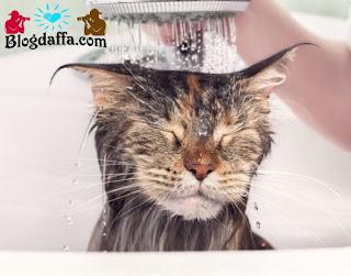 Cara memandikan kucing yang benar dan tidak berontak