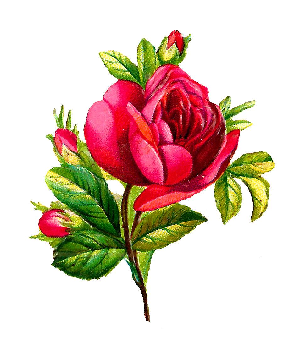 rose flowers digital design - photo #13