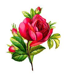 Antique Images: Digital Red Rose Clip Art Flower Download