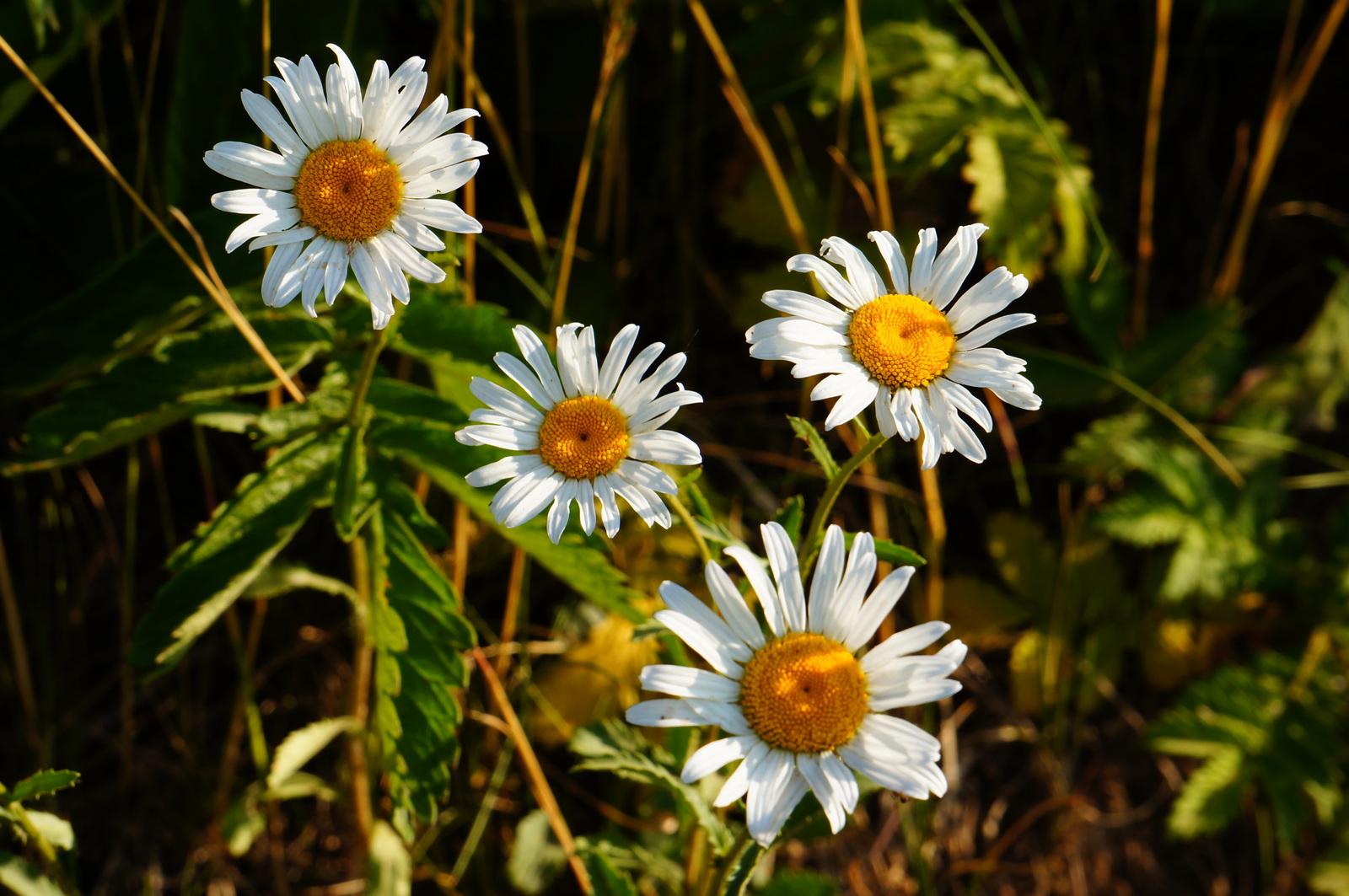 Ты так нежна как все цветы на свете
