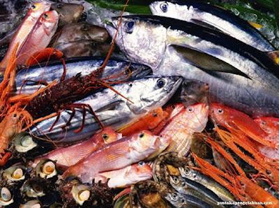 Manfaat Laut Bagi Kehidupan Manusia - pustakapengetahuan.com