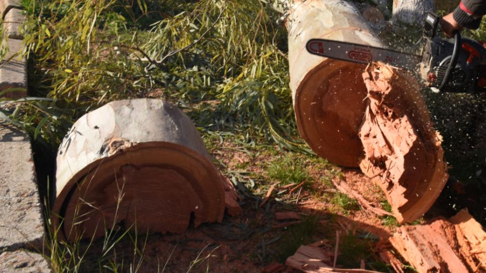 Ολοκληρώθηκαν οι κοπές 4000 δέντρων στη Χαλκιδική – Σε εξέλιξη οι καθαρισμοί ρεμάτων